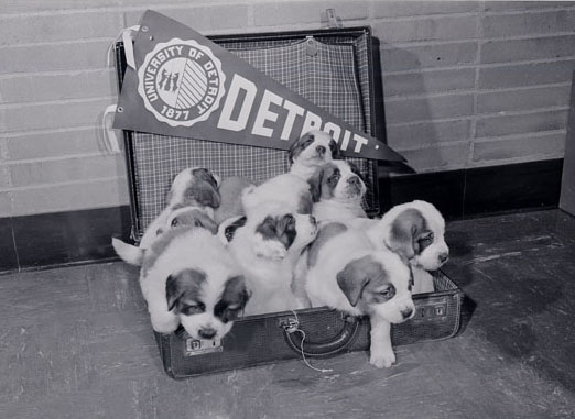 A day in the life of some puppies-1951 UD mascot Titania